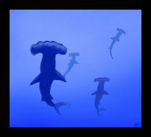 Hammerheads by Airgid