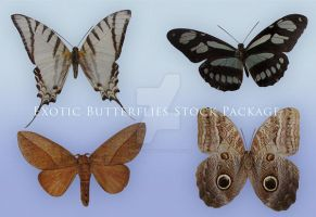 Exotic Butterflies Stock Package by Wesley-Souza
