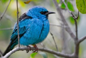 San Deigo Zoo 53 Blue Bird by Jskellington85