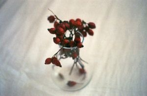 rosehips. by BlackDennie