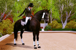 Dressage 3 - Picture TS3 by Gipsik