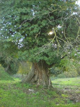 Tree of the hanged by crixus