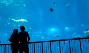 seaquarium couple by wisephotography