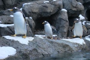 Marching penquins by Jackelfoot