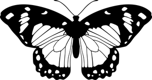 Butterfly (Black and White) by Eiluvision