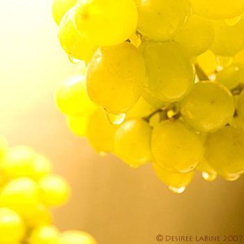 Grapes I by dmleo22