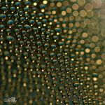 Streak Of Clarity by Silver-Dew-Drop