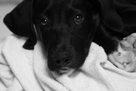 Puppy dog eyes Black and white by arruruu