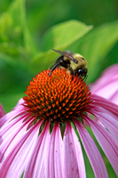 Bee On Top by tCentric-media