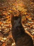 Autumn kitteh by 7DS7