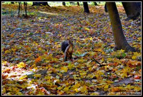 squirrel by Iulian-dA-gallery
