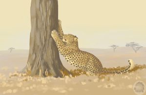 Stretching leopard by Kivuli