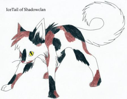 Icetail of Shadowclan by Seri-goyle