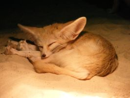 fennec by Lucie-Lilly