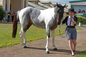 Seal Brown Roan Tobiano by suuslovertje