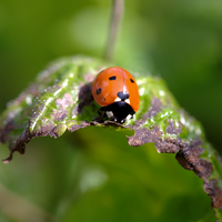 Ladybird in visible light by bmh1