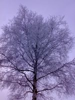 A winter tree by vonderwall