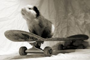 sk8rpig II by AndySimmons