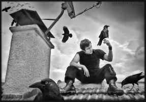 THE MAN WHO KNOWS ABOUT CROWS by bogac