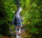 Moss Glen by Magnius159
