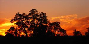 The Gloaming by SunOwl