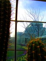 conservatory through glass by MadamStephana
