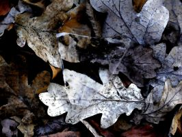 Ice On Leaves by TexArcana1962