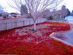 Red Lawn Winter of my Heart by KittenDiotima