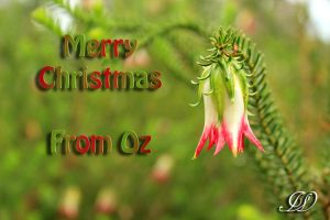 Merry Christmas From OZ by Labrug