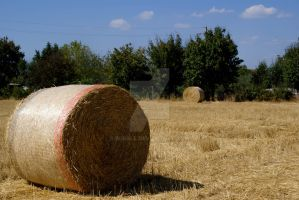 Hay. by BluAle