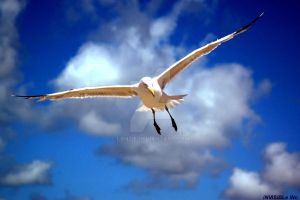 Wingspan by Lanzie