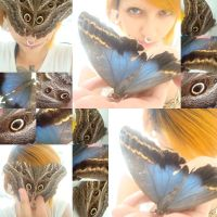 butterfly by PanicPsycho