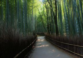 Bamboo paths by mymonogatari