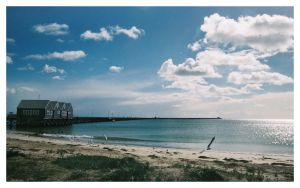 Seagulls at Busselton jetty by wildplaces