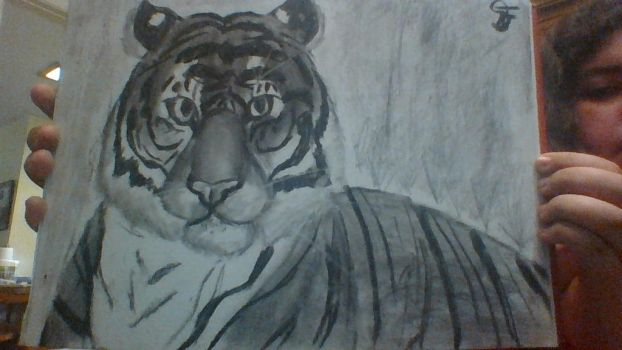 Tiger Charcoal Drawing by Petals-in-the-Wind