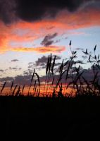 Grass Against Sunset by Ashtyn-Renee