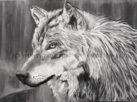 Wolf Opaque Painting by puremayhem