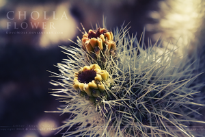 Cholla Flowers by KovoWolf