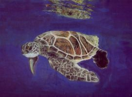 Sea Turtle - Oil Pastels by bluehybun