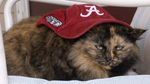 Bama cat by CaptainIcy