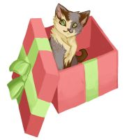 CatInaBox by Deericious
