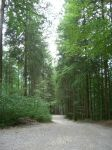 Forest Stock - 05 by VampireSybelle-Stock