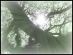 Let There be light passing through the branches by MushroomBrain