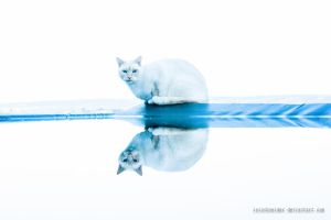 Cat Reflection by isischneider