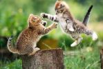 Kitten fight by Sabahat-M
