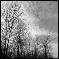 2013-062 Winter sky by pearwood