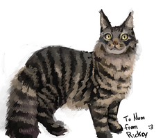 Mom's Christmas Present: Main Coon oWo by ApplejackMan