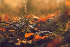 Between the bokeh by r3akc3