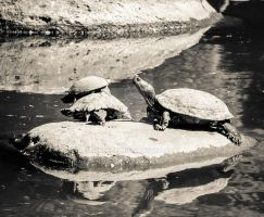 Turtles by mikeheer