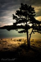 lonely tree on lake lanier by danielbierstedt